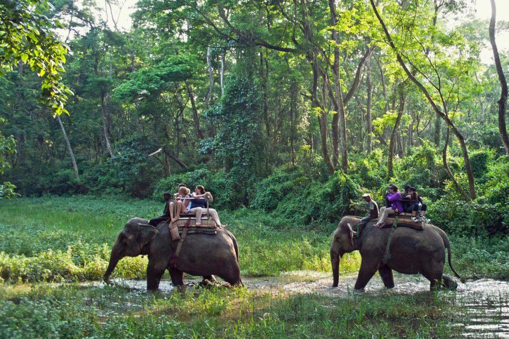 glamping y elefantes
