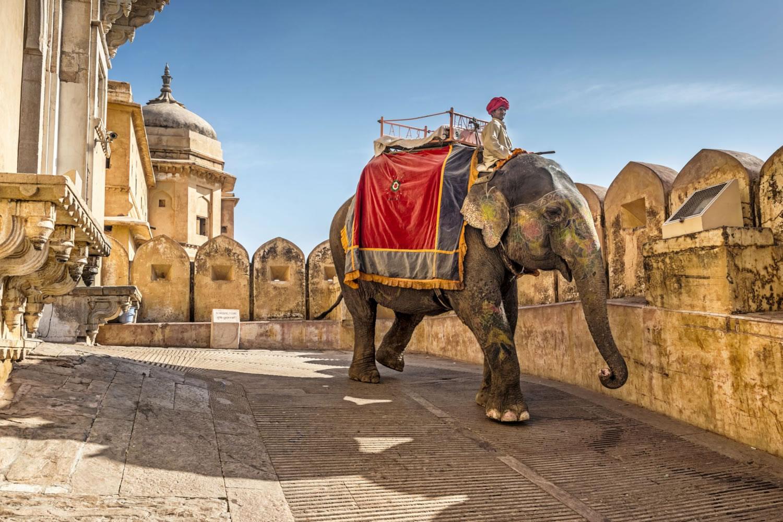 montar en elefante en la india