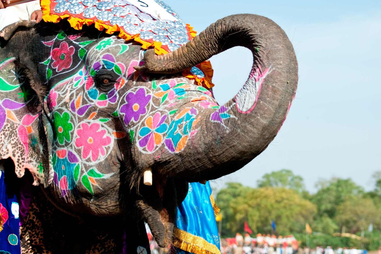 elefante de la India